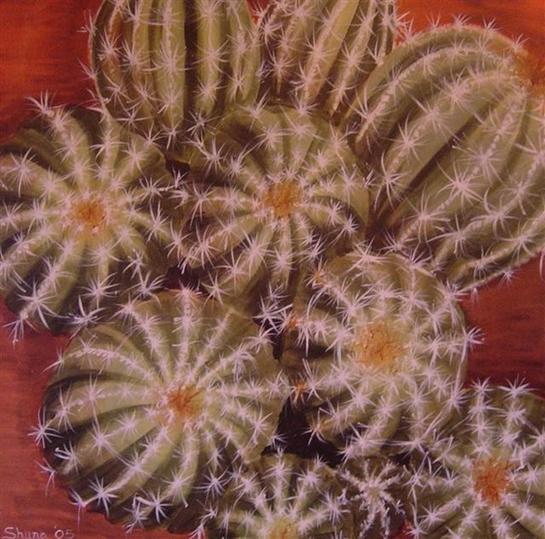 cactus - Click to make an enquiry